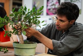Student Shapes His Bonsai at National Bonsai and Penjing Museum